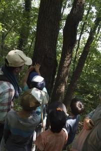目を凝らして木の幹を見続ける。隙間を覗くと、昆虫を見つけることもある