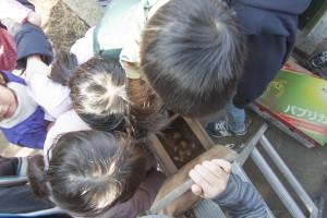 巣箱の中はどうなっているのか。みんな入れ替わって自分の目で確かめる